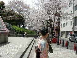 桃太郎さんと桜