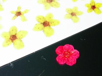 シールと本物の花を比較