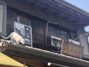 猫ちゃんのオブジェ