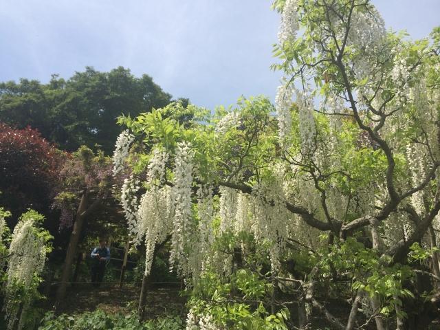 横須賀しょうぶ園&キタノ映画