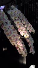蘭の花化粧